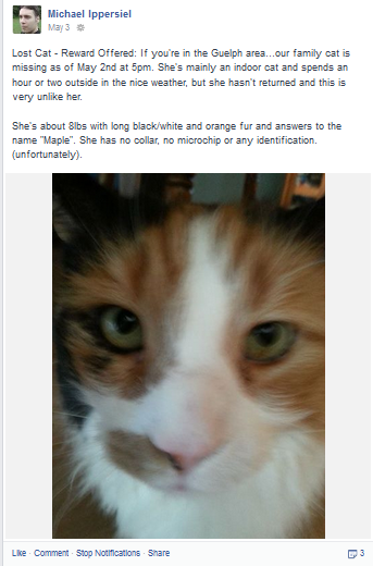 Maple the lost cat as posted on Facebook